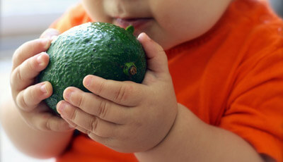 Avocados are good for babies